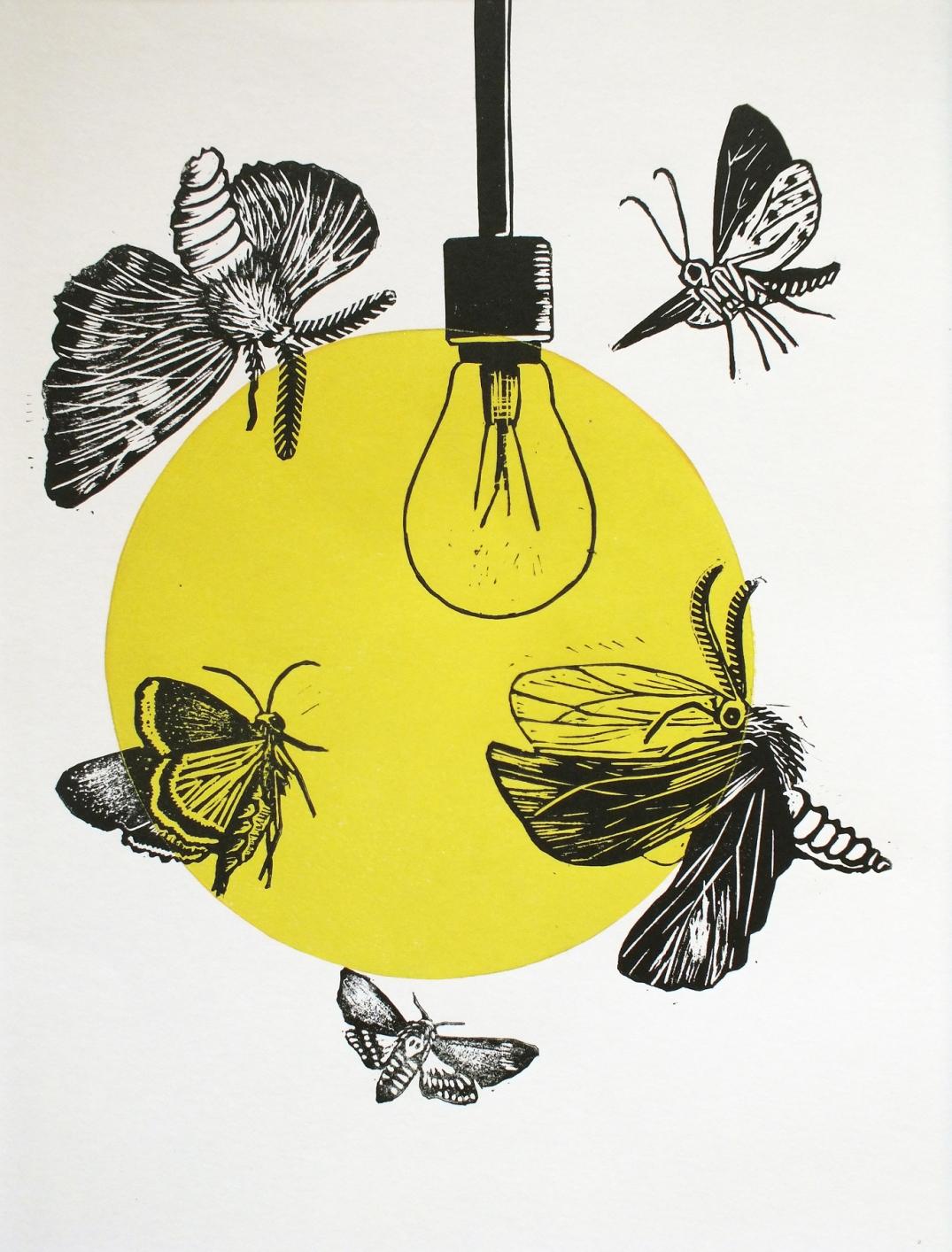 moths A3 2d
